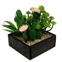 Kaktus og sukkulenter