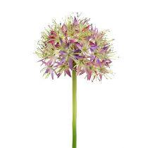 Allium lys lilla L76cm
