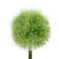 Alliumgrønn L37,5cm 4stk