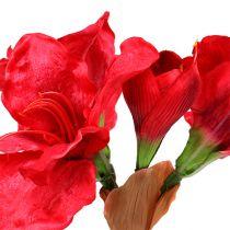 Amaryllis mørk rød 72,5 cm