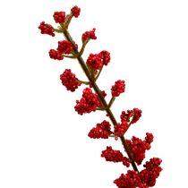 Astilben busk rød 52cm