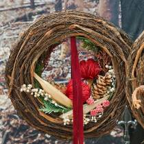 Banksia Baxterii rød 8stk