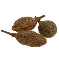 Baobab frukt skrelt 15cm - 20cm naturlig 5stk