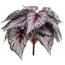 Begonia busk Bordeaux 37cm