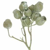Bellgum gren 5cm - 7cm grønn frostet 20stk