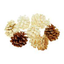 Fjellkegler, små, blekte 3,5-5cm 1kg