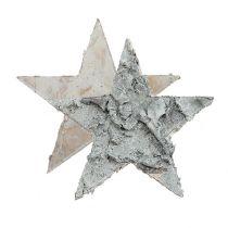 Spredt bjørkestjerne hvitkalket Ø4cm 80p