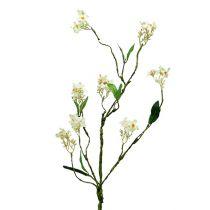 Blossom gren hvit L 65cm 1p
