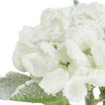 Hortensia hvit snødekt 33cm 4stk