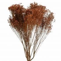 Tørkede blomster Broom Bloom Brown 170g