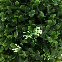 Boksvedgrønn Ø18cm 1st