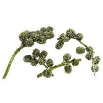 Casurina kjegler grønne, vokset 110g