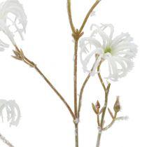 Clematis gren hvit strømmet 62cm 3stk