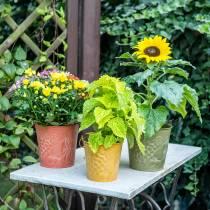 Dekorativ bøttefrukter gul, oransje, grønnvasket Ø15cm H14cm sett med 3
