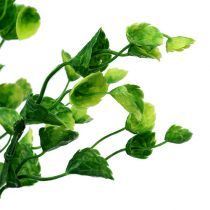 Dekorativ myntegren grønn L74cm 6stk