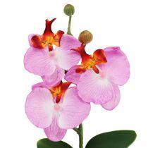 Dekorativ orkide i rosa gryte H29cm