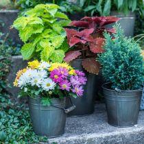 Dekorativ bøtte med håndtak, hagedekorasjon, plantepotte, metallkar Ø16,5cm H15cm