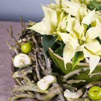 Dekoast karrybusk grønnvasket 500g