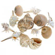 Dekorative skjell og snegleskall tomme hvite, naturlig dekor maritimt 350g