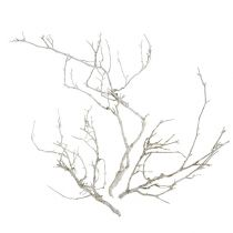 Dry Tree Hvitvasket 500g