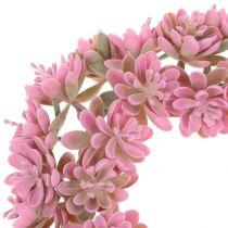 Echeveria kransrosa Ø18cm 4stk