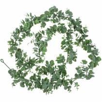 Eucalyptus kransegrønn 180cm