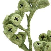 Eukalyptus gren grønn frostet 25stk