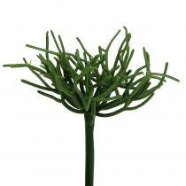 Euphorbia pick green 19cm 4stk