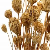 Tørkede blomster fennikel naturlig 100g