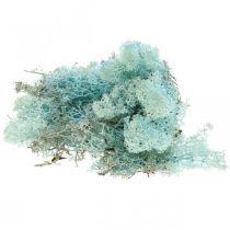 Dekorativ mose lyseblå akvamarin reinsdyrmossemose 400g