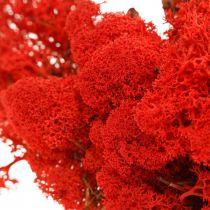 Dekorativ mosrød reinmos for håndverk 400g