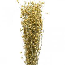 Lin naturgress for tørr blomster 100g