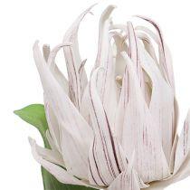 Skumblomst hvit, lilla 12cm L30cm 1p