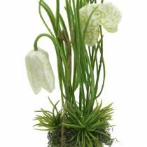 Fritilaria i eggeskallet for å henge kunstig grønt, hvitt 25cm