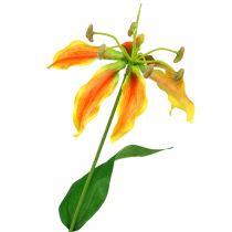 Gloriosa gren oransje-gul 90cm 1st