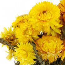 Halmblomst gul tørkede tørkede blomster dekorasjonsbunke 75g