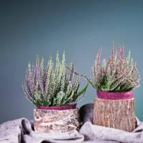Plantekrukke alm-tre Ø16-18cm H15cm