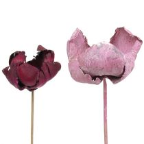 Treblomst, palmekoppblanding rosa-lyng 25stk