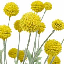 Drumstick Yellow Artificial Craspedia Silk Flowers