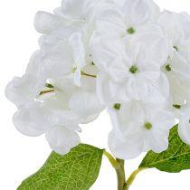 Hortensia 35cm hvit
