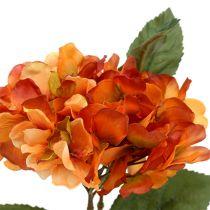 Hortensia oransje 30cm 3stk