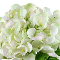Hortensia hvitgrønn 60cm