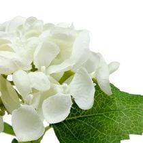 Hortensia 33cm hvit 1p