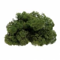 Moss reinreingrønn 400g