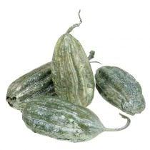 Luffa fruktgrønn 14cm 10st