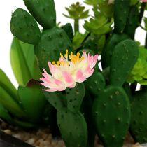Kaktus med blomst 14cm i en trekasse