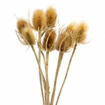 Tørkede blomster tidsel natur 8stk