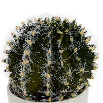 Kaktus i en grytegrønn 14cm