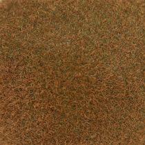 Kiwi 7,5 cm