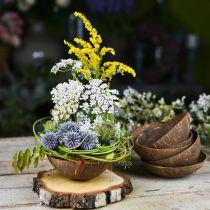 Kokosdekorasjonskål naturlig polert 6 stk